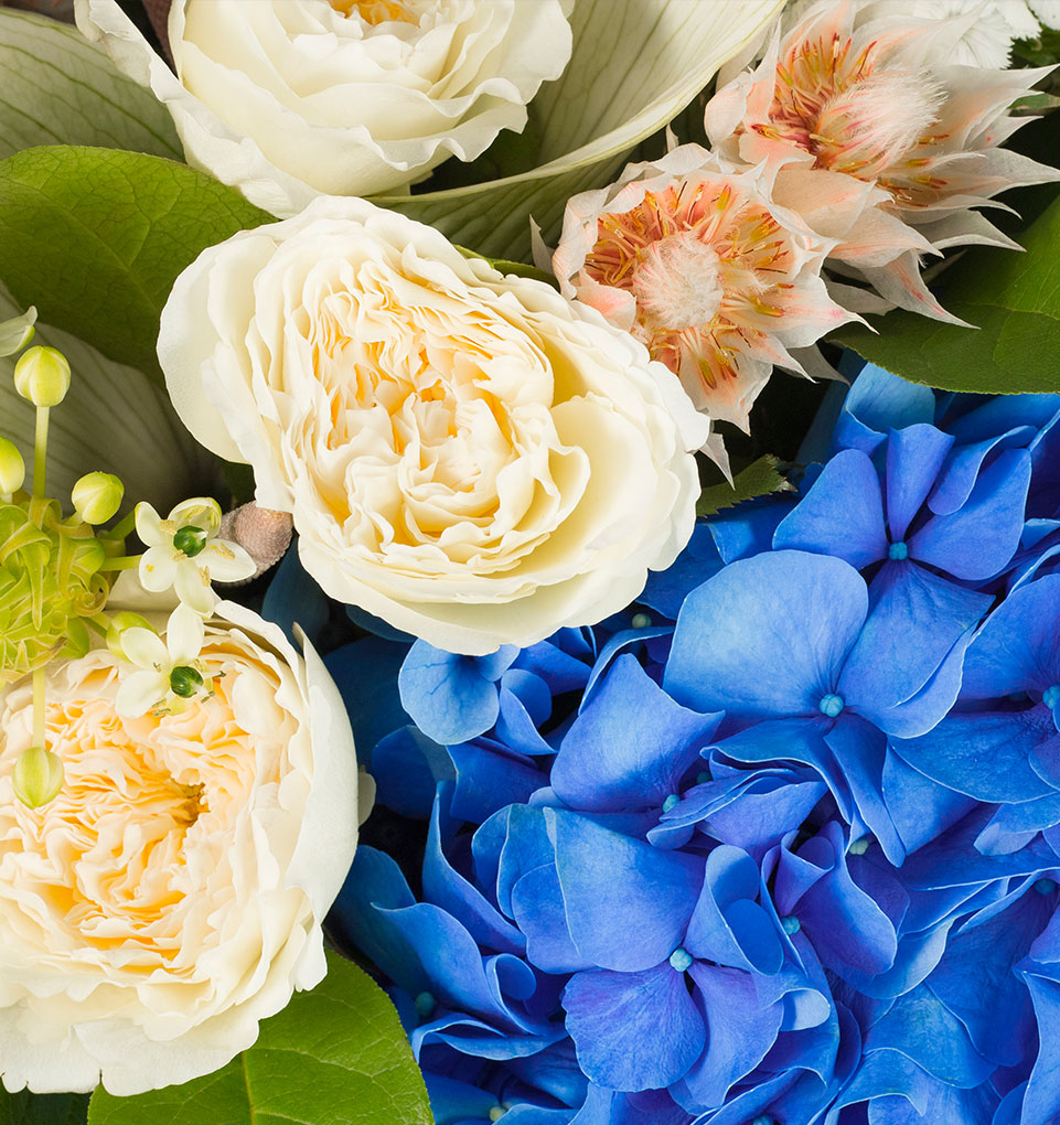 Close Up of O'Keeffe Blue Hydrangea and Rose Flower Bouquet by flannel flowers